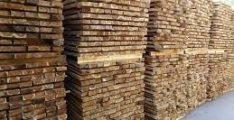 Đặc điểm gỗ tràm